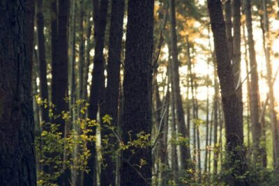 Forestry SFI ATFS (Sustainable Forestry)-Internal Auditing Pros of America